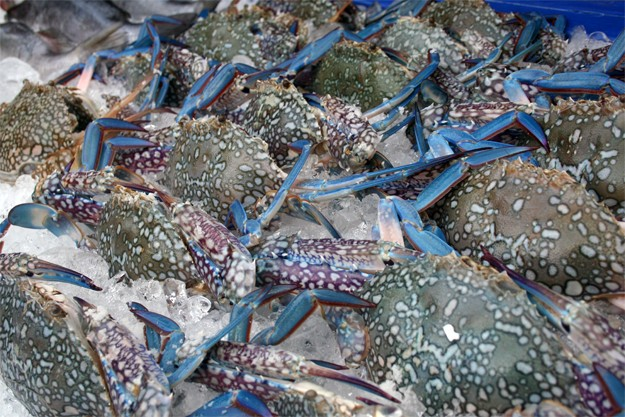 Blue crabs in Phi Phi